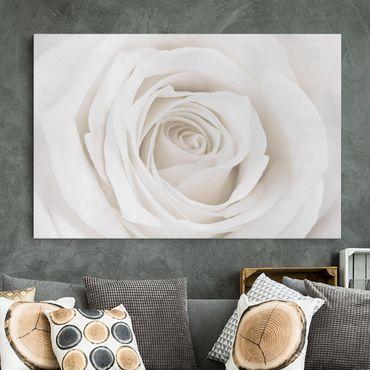 Leinwandbild - Pretty White Rose - Quer 3:2