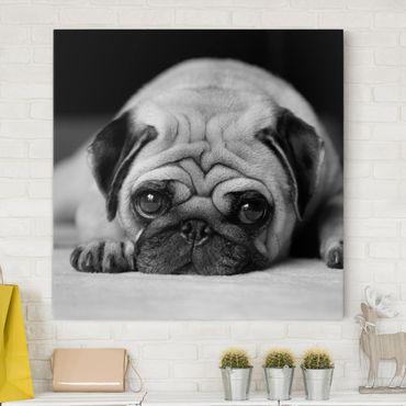 Leinwandbild Schwarz-Weiß - Pug Loves You II - Quadrat 1:1