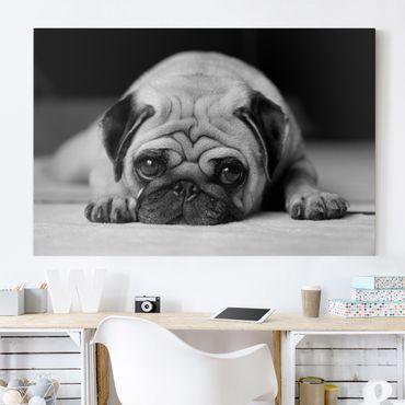 Leinwandbild Schwarz-Weiß - Pug Loves You II - Quer 3:2