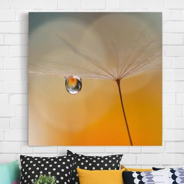 Leinwandbild - Pusteblume in Orange - Quadrat 1:1