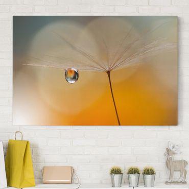 Leinwandbild - Pusteblume in Orange - Quer 3:2