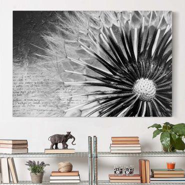 Leinwandbild - Pusteblume Schwarz & Weiß - Quer 3:2