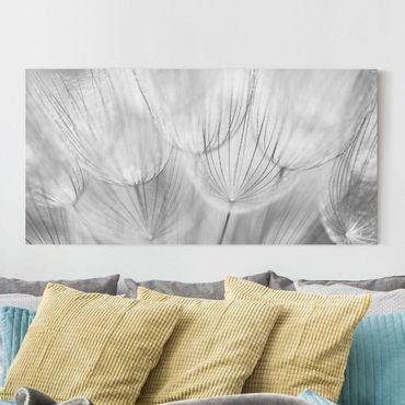 Leinwandbild - Pusteblumen Makroaufnahme in schwarz weiß - Panoramabild Quer