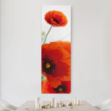 Leinwandbild - Radiant Poppies - Panorama Hoch