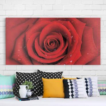Leinwandbild - Rote Rose mit Wassertropfen - Quer 2:1