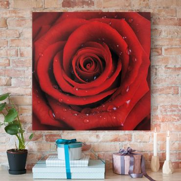 Leinwandbild - Rote Rose mit Wassertropfen - Quadrat 1:1