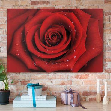 Leinwandbild - Rote Rose mit Wassertropfen - Quer 3:2