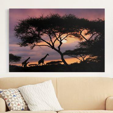 Afrika Leinwandbild Safari in Afrika - Giraffen, Lila, Schwarz, Quer 3:2