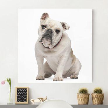 Leinwandbild - Skeptische Bulldogge - Quadrat 1:1