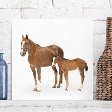 Pferde Leinwandbild - Stute & Fohlen - Quadrat 1:1