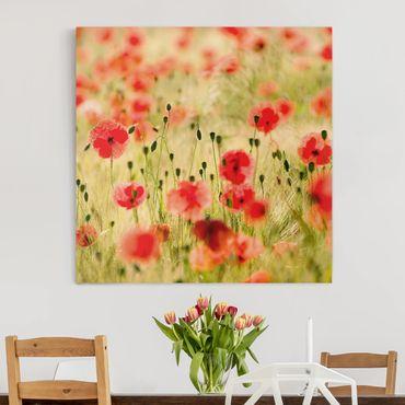 Leinwandbild - Summer Poppies - Quadrat 1:1