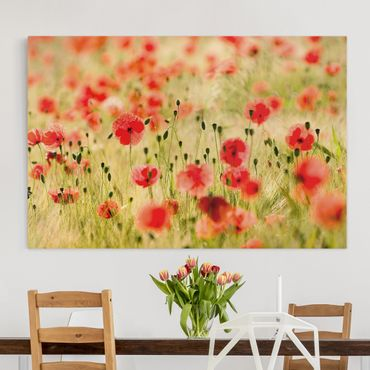 Leinwandbild - Summer Poppies - Quer 3:2