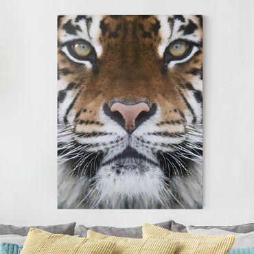 Leinwandbild - Tiger Eyes - Hoch 3:4