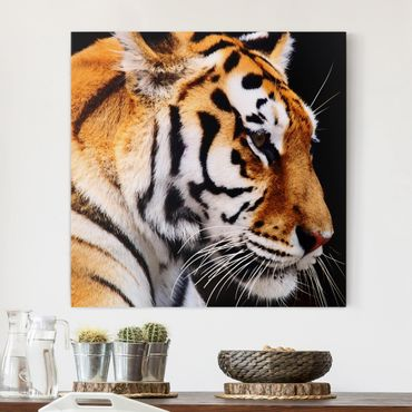 Leinwandbild - Tiger Schönheit - Quadrat 1:1