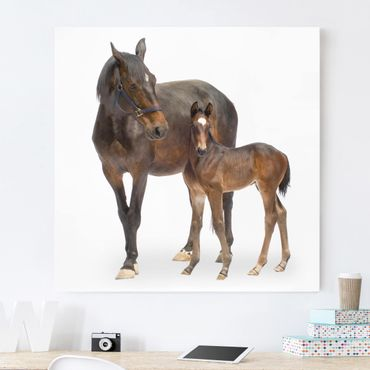 Leinwandbild Pferd - Trakehnerstute & Fohlen - Quadrat 1:1