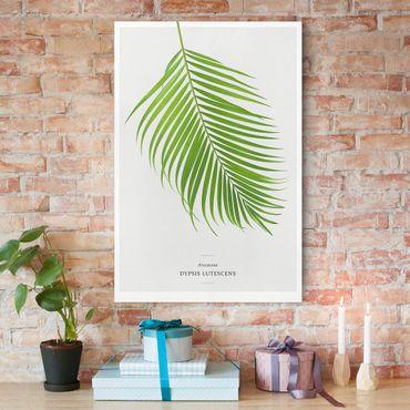 Leinwandbild - Tropisches Blatt Areca Palme - Hochformat 2:3