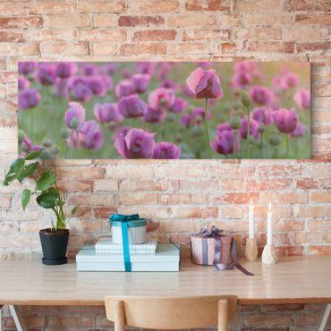 Leinwandbild - Violette Schlafmohn Blumenwiese im Frühling - Panorama Quer