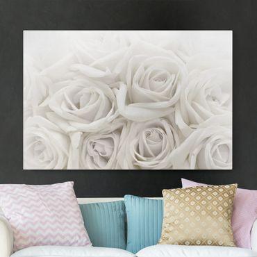 Leinwandbild - Weiße Rosen - Quer 3:2