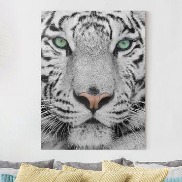 Leinwandbild - Weißer Tiger - Hoch 3:4
