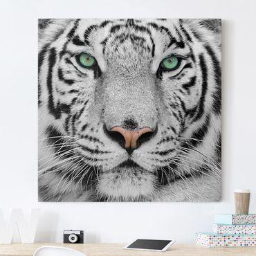 Leinwandbild Schwarz-Weiß - Weißer Tiger - Quadrat 1:1