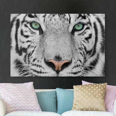 Leinwandbild Schwarz-Weiß - Weißer Tiger - Quer 3:2