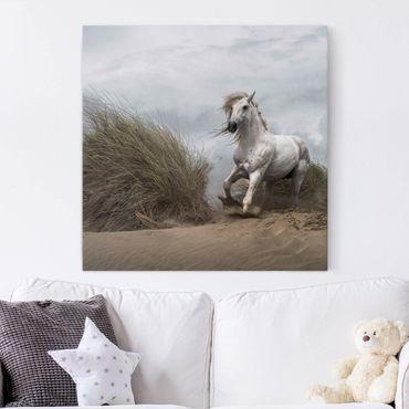 Leinwandbild - Weißes Pferd in den Dünen - Quadrat 1:1
