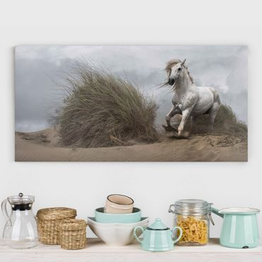 Leinwandbild - Weißes Pferd in den Dünen - Quer 2:1