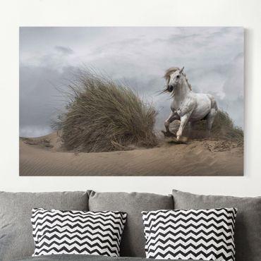 Leinwandbild - Weißes Pferd in den Dünen - Quer 3:2