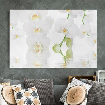 Leinwandbild - Wellness Orchidee - Weiße Orchidee - Quer 3:2