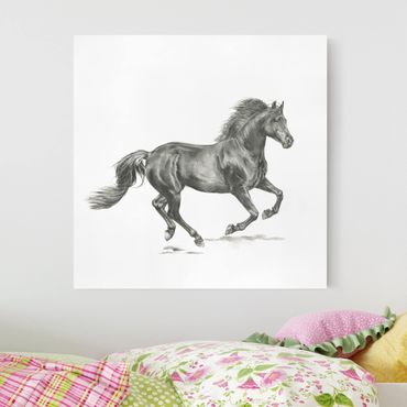 Leinwandbild - Wildpferd-Studie - Hengst - Quadrat 1:1