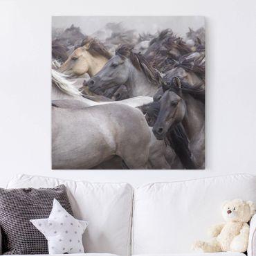 Leinwandbild - Wildpferde - Quadrat 1:1