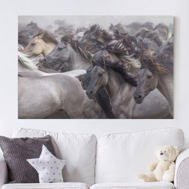 Leinwandbild - Wildpferde - Quer 3:2