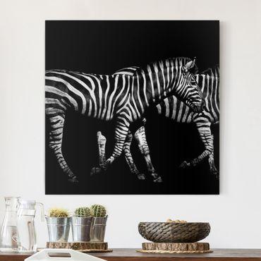 Leinwandbild - Zebra vor Schwarz - Quadrat 1:1