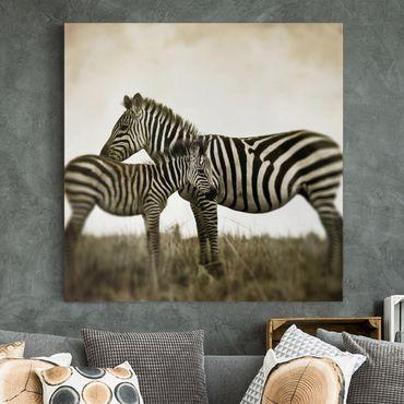 Leinwandbild - Zebrapaar - Quadrat 1:1