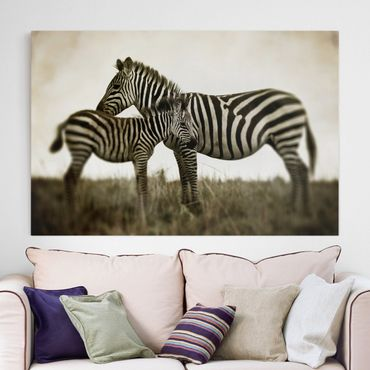 Leinwandbild Schwarz-Weiß - Zebrapaar - Quer 3:2