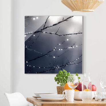 Glasbild - Lichttropfen am Birkenzweig - Quadrat