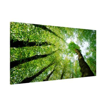 Magnettafel - Bäume des Lebens - Memoboard Panorama Quer