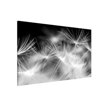 Magnettafel - Bewegte Pusteblumen Nahaufnahme auf schwarzem Hintergrund - Memoboard Panorama Hoch