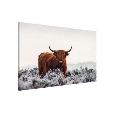 Magnettafel - Bison in den Highlands - Memoboard Querformat 2:3