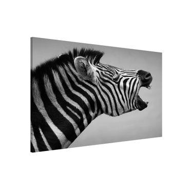 Magnettafel - Brüllendes Zebra II - Memoboard Quer