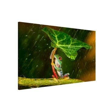 Magnettafel - Ein Frosch im Regen - Memoboard Querformat 2:3