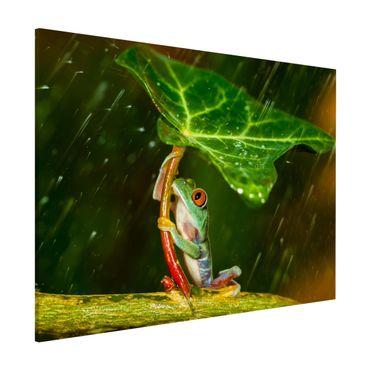 Magnettafel - Ein Frosch im Regen - Memoboard Querformat 3:4