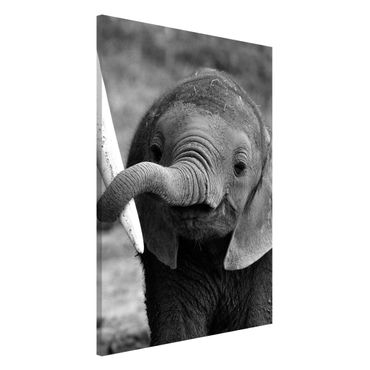 Magnettafel - Elefantenbaby - Memoboard Hoch