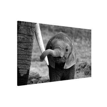 Magnettafel - Elefantenbaby - Memoboard Quer