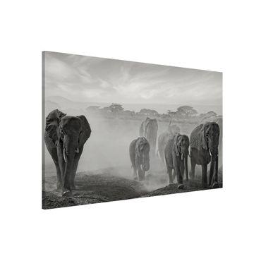 Magnettafel - Elefantenherde - Memoboard Quer