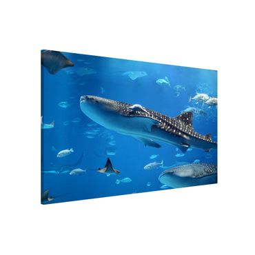 Magnettafel - Fish in the Sea - Memoboard Quer