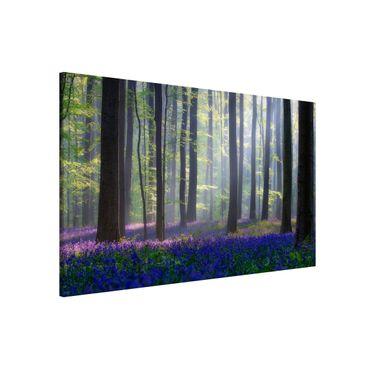Magnettafel - Frühlingstag im Wald - Memoboard Quer