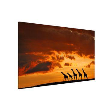 Magnettafel - Fünf Giraffen - Memoboard Quer