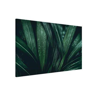 Magnettafel - Grüne Palmenblätter - Memoboard Querformat