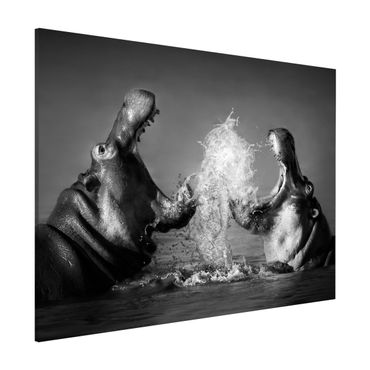 Magnettafel - Hippo Fight - Memoboard Quer